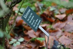 Pflanzenschild Hampton Court
